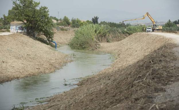 Limpieza de cañas en el río Segura